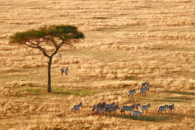 Arusha, Tanzania Travel Tips: Pip's Take on Health, Safety and Romance