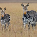 A South African's Take on Diverse African Safaris