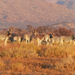 One Year In Namibia: A Conversation with Tina Cuomo