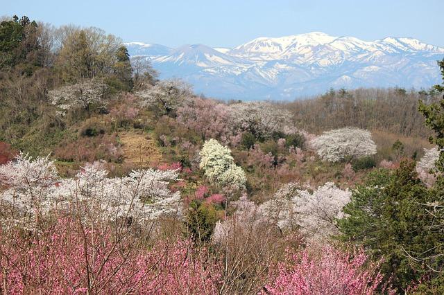 Living in Japan's Fruit Capital, Fukushima